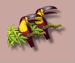 [pair of toucan images, one on top of the other]